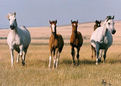 Fem-Mares-foals