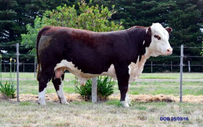 2018 Bull Sale