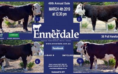 2019 Bull Sale